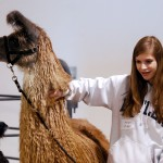 Abby Dugger, a freshman at Hamilton Southeastern, talks about the three types of llama coats.