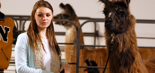 Noblesville High School's Madison McFadden shares what she's learned through the 4-H llama project.