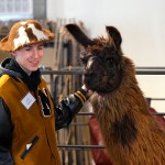 Noblesville High School's Jaco Overton shares what he's learned through the 4-H llama project.