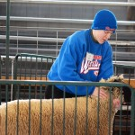 Eli Self of Hamilton Southeastern Junior High grabs the next sheep to get sheared as part of the demonstration.