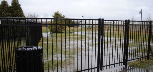 Visit the dog park at Clay Terrace mall is likely to be a muddy experience.��������������