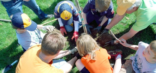 Members of Cub Scout Pack 126 Den 1 add dirt around its tree being planted in Asa Bales Park.