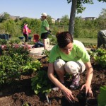 Stacey Pomeroy, RN, Clinical Coordinator at IU Health North Hospital, plants flowers in the ABC Children's Garden during the IU Health Day of Service. (Submitted photo)