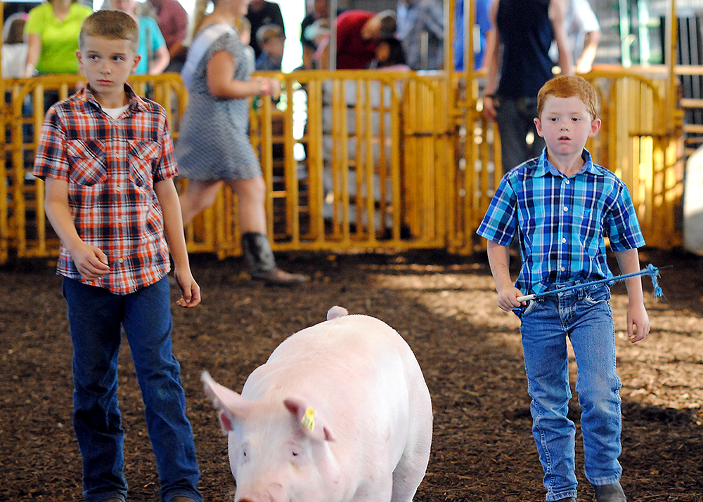 Ty Macy, left, watches as his cousin, Trent Horney of Westfield, shows a pig during the Youth Swine Exhibition in the Show Arena. (Photo by Robert Herrington)