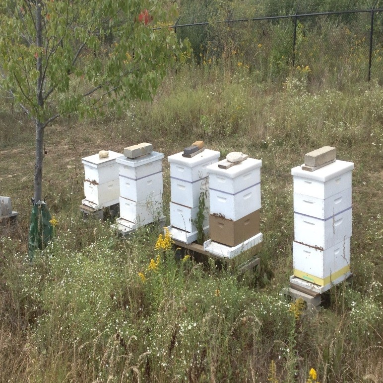 Bee boxes line the property of Clay Township Regional Waste District. (Submitted photo)