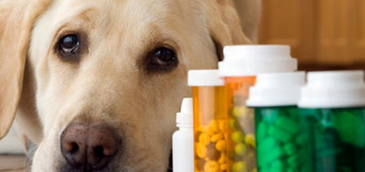 Shopping around for your pets medications could provide considerable savings. (Submitted photo)