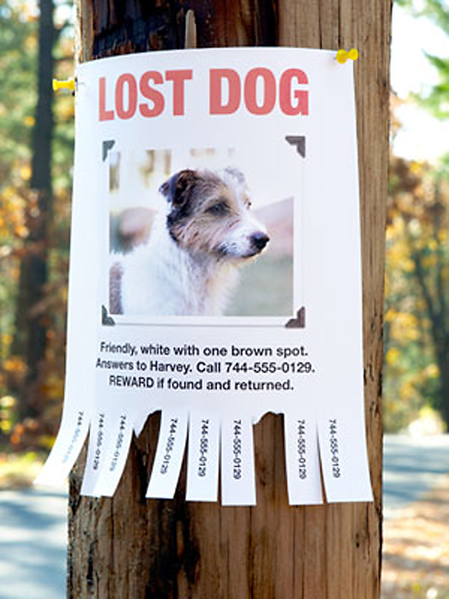 Column Factors That Influence A Lost Dog