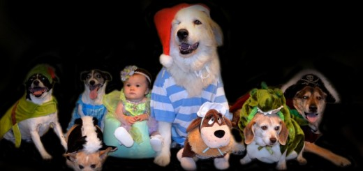 "Current reader Laura Lynch, wrote: ""We have eight rescue dogs and a 9-month-old daughter named McKinley. We decided to dress our daughter up as Tinker Bell and the dogs as Peter Pan characters."""