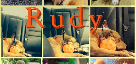 Rudy, a rescued dog, is still looking for a home.
