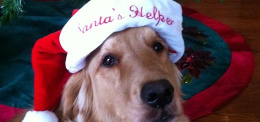 Dog Izzy, owner is Tracy Kueber.
