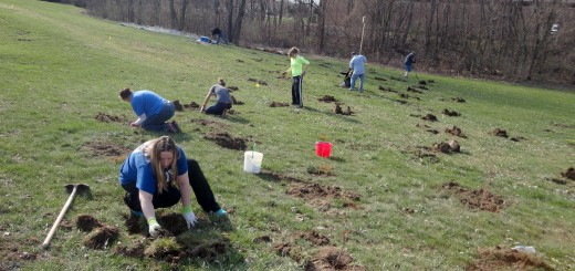 More than 350 tulip, white oak, white pine, ninebark and dogwood trees and bushes were planted at Cool Creek Park's southwest meadow to block the view of U.S. 31. (Submitted photo)