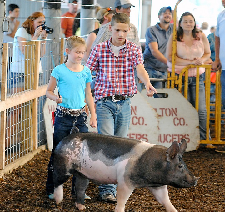 Blake Webel assists his sister, Ashley, in exhibiting a pig during last year's county fair. (File photo)