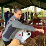 Larisa Victor picks out a free sugar maple tree April 25 for Arbor Day at Asa Bales Park. (Photos by Anna Skinner)
