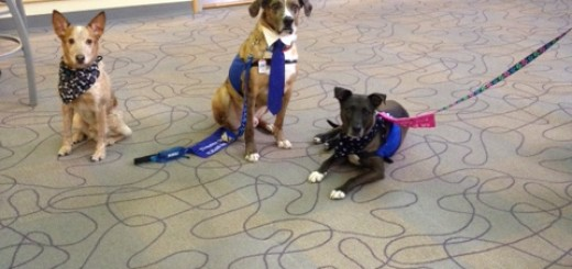 Therapy dogs at Puppies & Popcorn event. (Submitted photo)