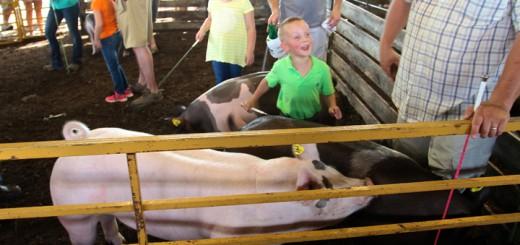Owen Higginbotham, 4, of Noblesville, shows swine on July 18.