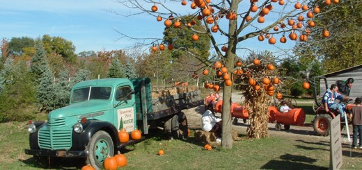 The pumpkin tree at Stoneycreek Farm. (Submitted photo)