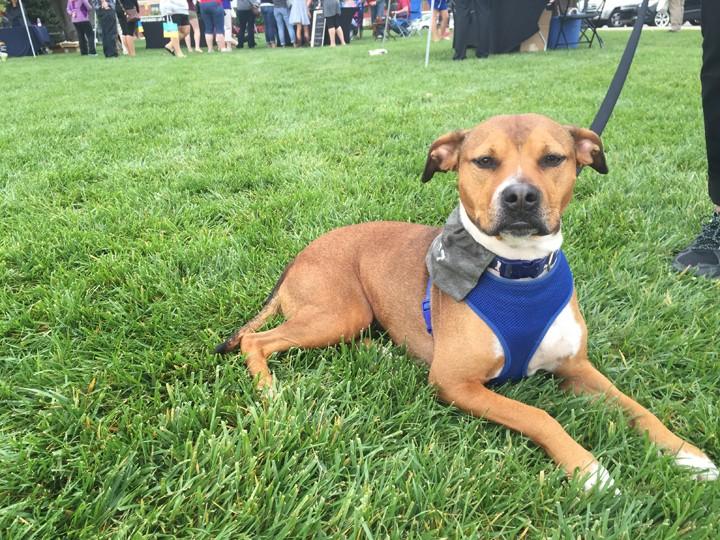 CIC-COM-1006-Adopt a Dog 2