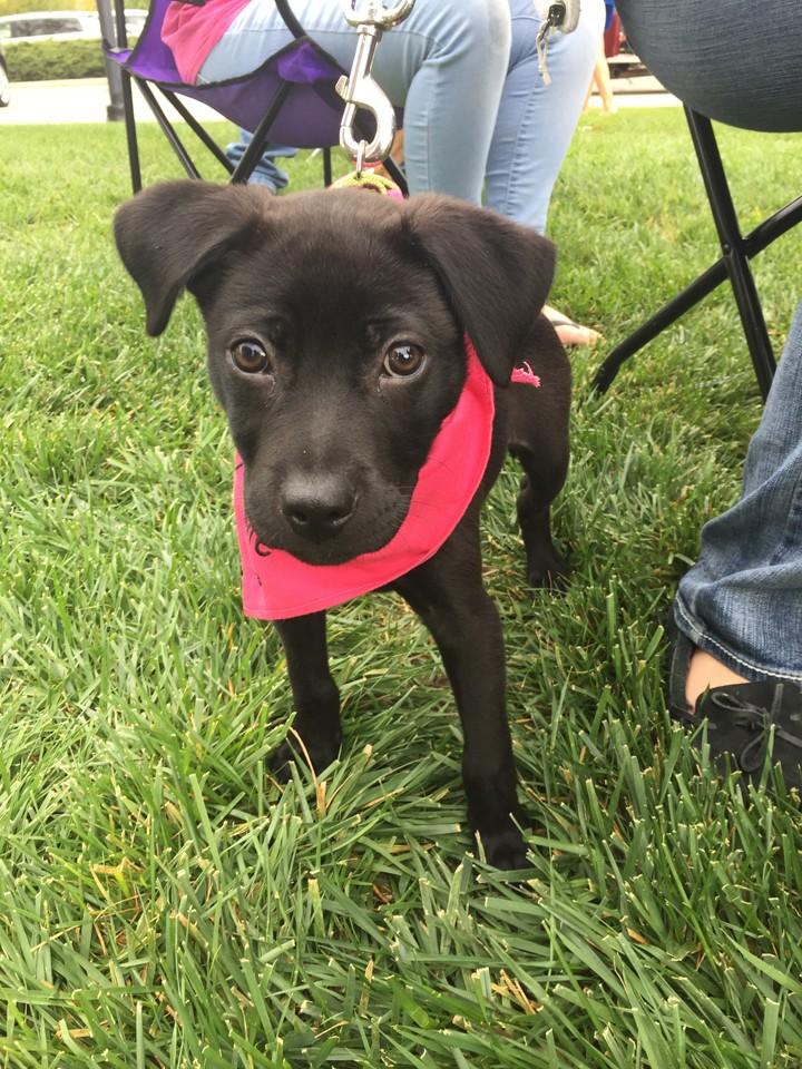 CIC-COM-1006-Adopt a Dog 4