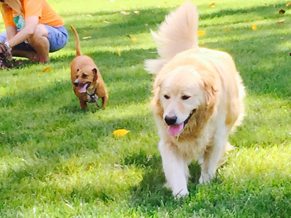 Dogs Honeybear and Lilly in the Carmel dog park. (Submitted photo)
