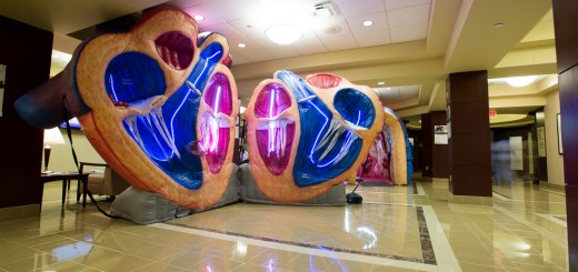 A live tour of the heart will take place on Oct. 2. (Submitted photo)