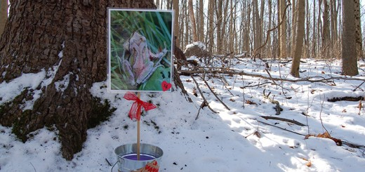 Images of hearts found in nature, like on the top of a frog's head, line the Heart Hikes trail at Ritchey Woods. (Submitted photo)