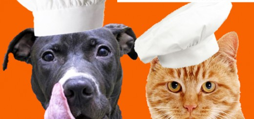 dog-cat-humane-society-logo