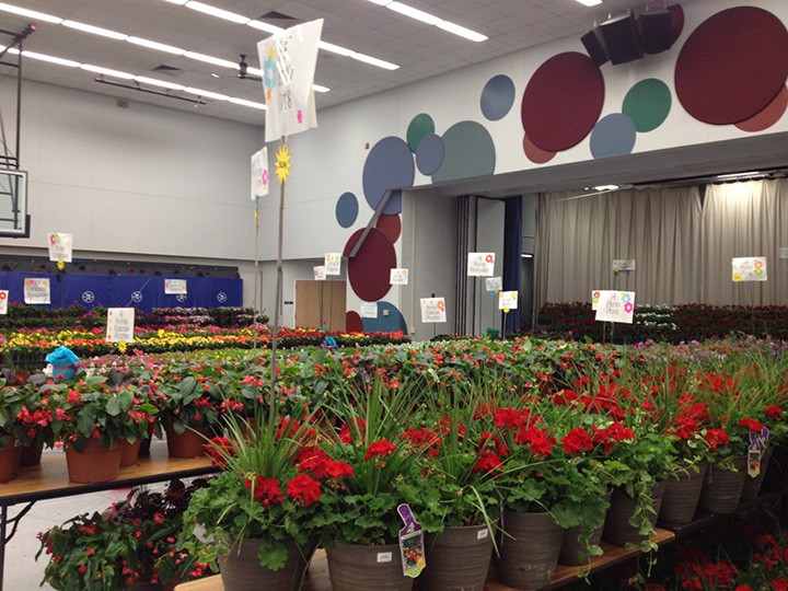 The gym at Carmel Elementary School will be filled with flowers during the annual flower sale, with pickup this year set for April 29. (submitted photo)