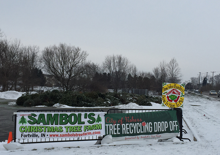 Fishers Parks Get Facelift From Recycled Christmas Trees