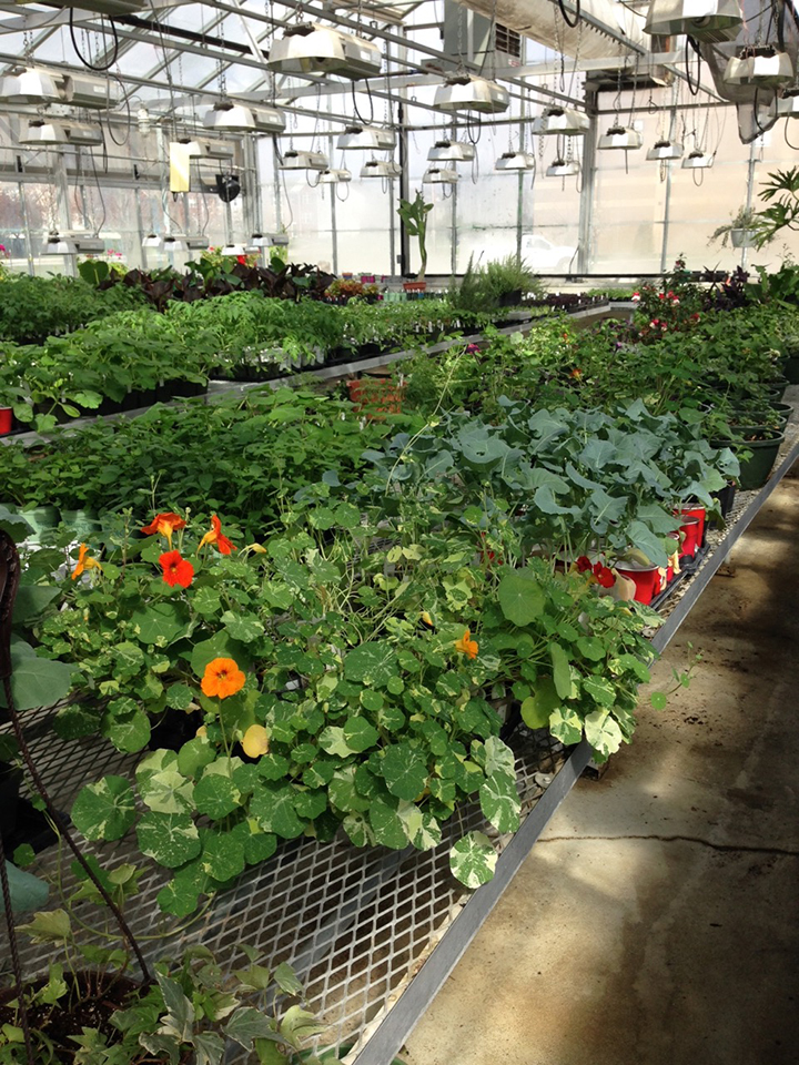 Plants available from HSEHS greenhouse | Current Publishing on green lavender, green beets, green bonsai, green bushes, green perennial, green garden design, green flowers, green tulips, green nature, green gardening, green shrubs, green butternut squash,