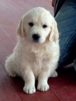 Commentator Sean Hannity is now the owner of Marley, a cream retriever. ������������������