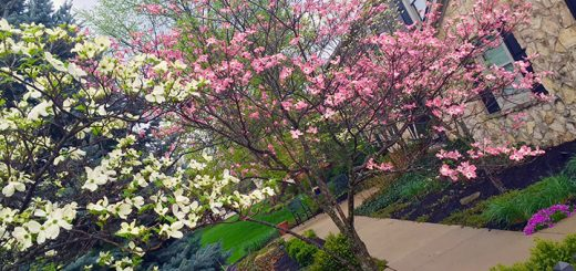 Colorful blooms lead to thoughtful landscapes. (Submitted photo)