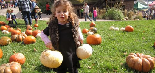 Kids of all ages can enjoy finding a pumpkin at the Traders Point Creamery Oktoberfest. (File photo)