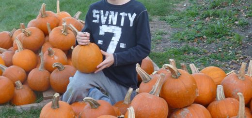 Will Selm is among the many children who help set up the annual Pumpkin Patch at St. Francis Church (Submitted photo)