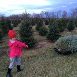 Lance Sambol will open Sambol's Tree Farm next weekend for the holiday season. (Photo by Sadie Hunter)