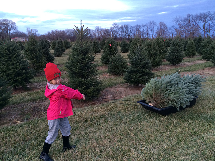 Real. Fresh. Trees.: Sambol's Tree Farm Grows To First