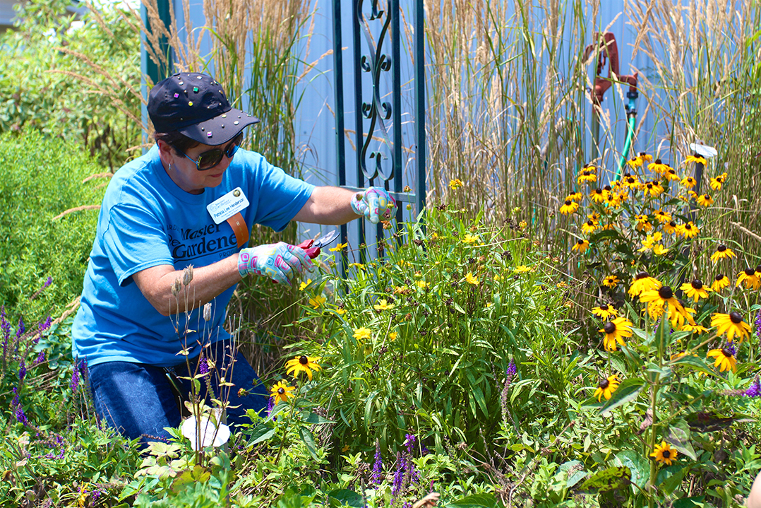 Swapping Seeds County 39 S Master Gardener Program To Host First Seed Swap For Region Current