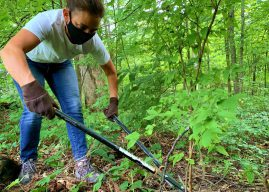 Survey reveals most invasive plant species in Hamilton County