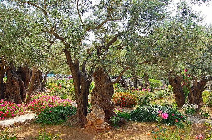 Column: The Garden Of Gethsemane Photo